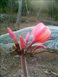 Indische Flora