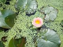 Teich, 小さい池