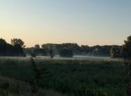 朝07:00時、ディスカウ公園の辺りの景色、ライデ川のそばにあら草原