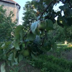 ディスカウ公園とディスカウ城のリンゴ木