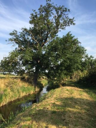 ディスカウ公園の辺りの景色、ライデ川と岸