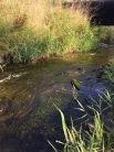 ハレザーレ市近郊のディスカウ公園にあるライデ川