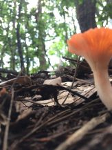 成竹山 Pilze im Wald.