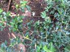 成竹山 Pflanzen und Blumen des Waldes.